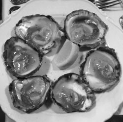 Native Oyster